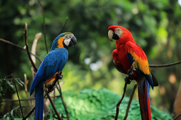 Two macaws perched on a tree branch