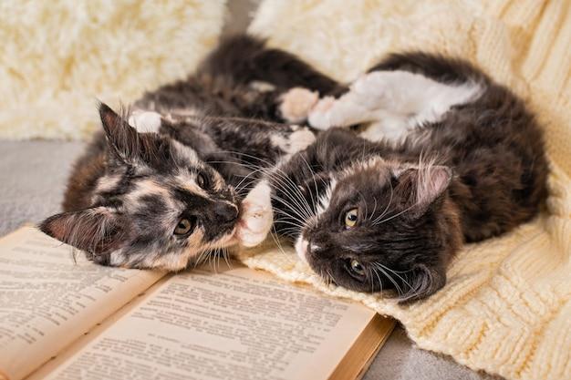 2匹のメインクーンの子猫が居心地の良い雰囲気の中で開いた本の横にあるニットのセーターの上に横たわって遊んでいます