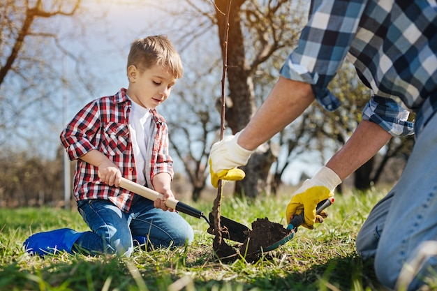 Two male generations spending free time outdoors by gardening together and setting a new fruit tree