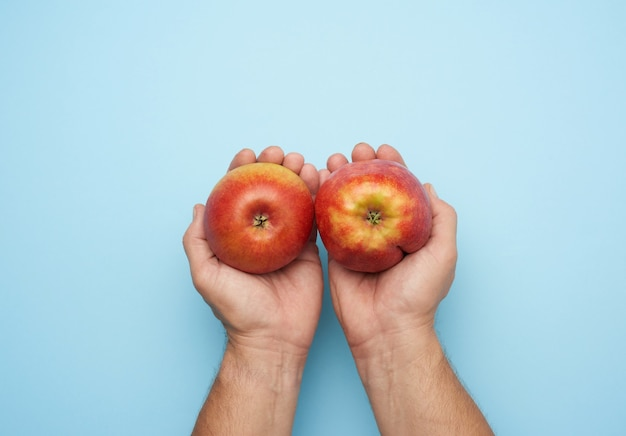 Two male hands hold a ripe red apple on a blue