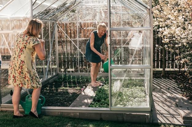 온실에서 일하는 두 명의 성숙한 여성, 식물에 물을 주고 있습니다.