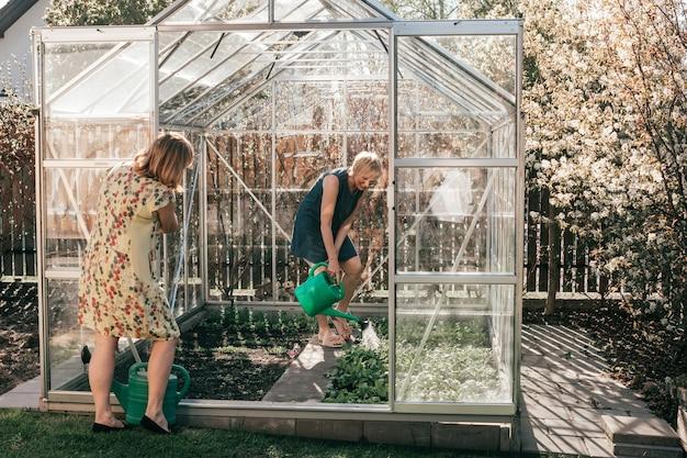 온실에서 일하는 두 명의 성숙한 여성, 식물에 물을 줍니다.