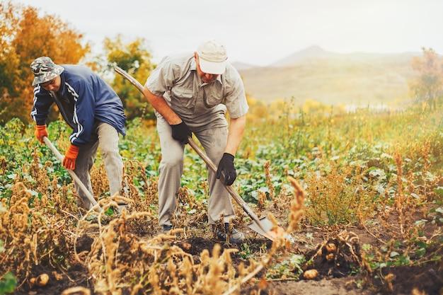 庭でジャガイモを掘っている2人のmem。