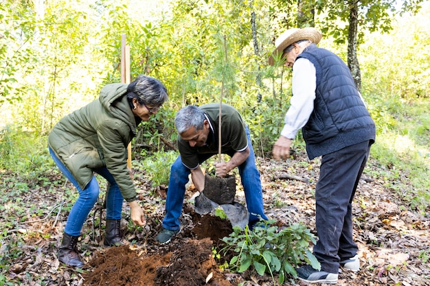 Two men and a woman planting a tree in a hole in the ground the middle of the forest on a sunny day