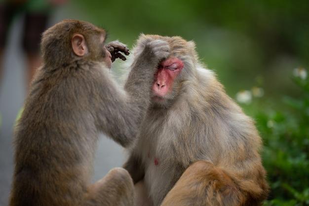 두 원숭이가 서로를 청소하고 있다