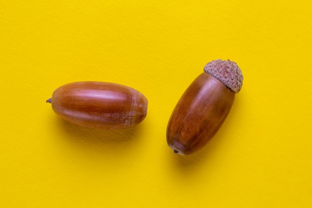 Two oak acorns on a yellow background