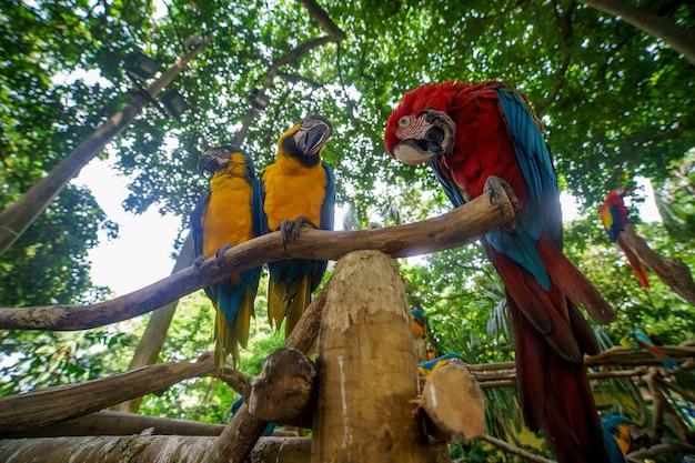 Два сине-желтых ара и красный ара сидят на ветке.