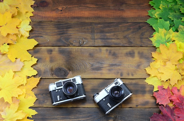 Two old cameras among a set of yellowing fallen autumn leaves