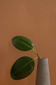 インテリアの装飾として茶色の壁に立っている灰色の粘土の水差しまたは花瓶の細い枝に国産植物の2つの楕円形の緑の厚い葉