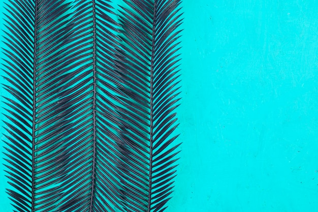 Two palm leaves pattern against teal background