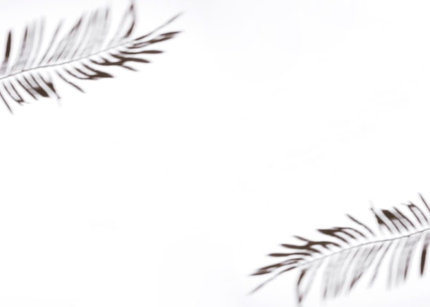 Two palm leaves on white background