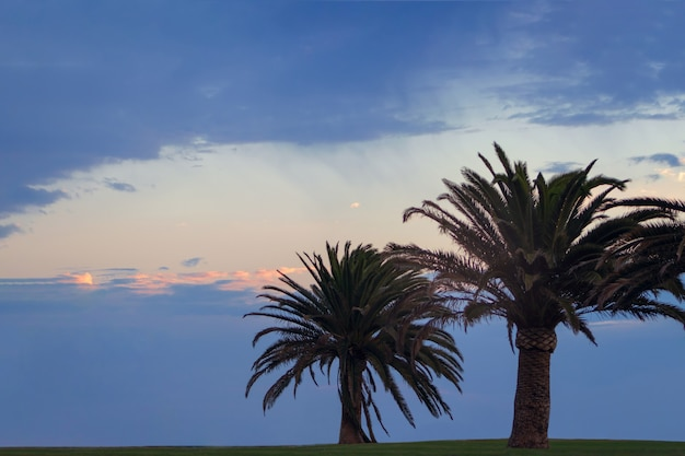 Две пальмы и красивое небо с драматическими облаками