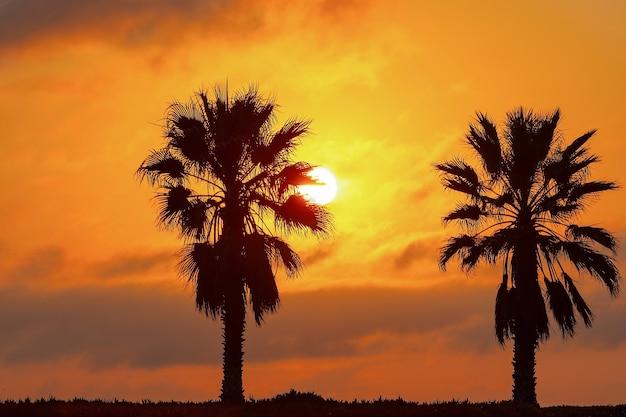 Две пальмы, тяжелые драматические облака и яркое небо. красивый африканский закат над лагуной.