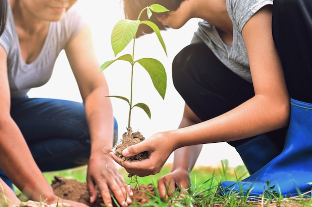 Two people helping and planting tree in nature for save earth
