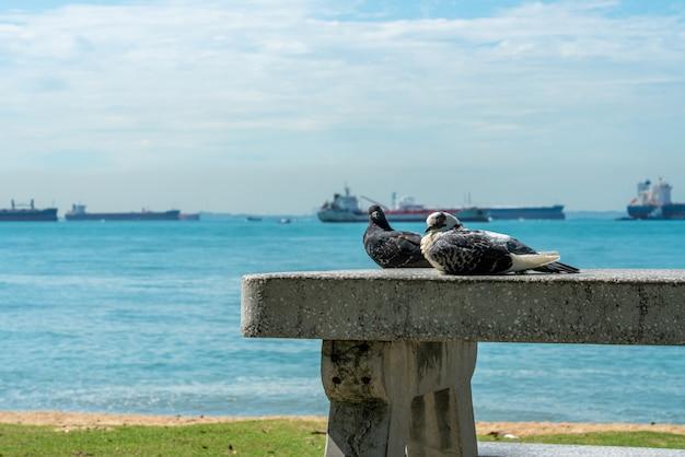 푸른 하늘과 바다를 배경으로 벤치에 있는 두 마리의 비둘기