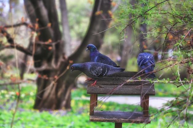 公園の鳥の餌箱の上に座っている2つのハト