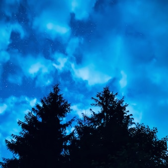 Two pine trees under blue night sky with many stars