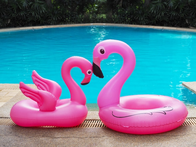 Two pink flamingo family near swimming pool