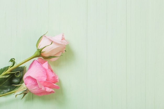 Two pink roses on green wooden surface