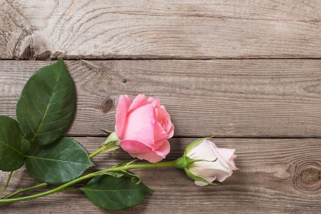 Two pink roses on old wooden surface