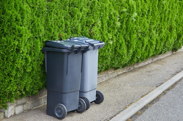 Two plastic garbage cans stand on clean asphalt on a background of green bushes of a thuja on a sunny day. the concept of recycling garbage, city cleanliness