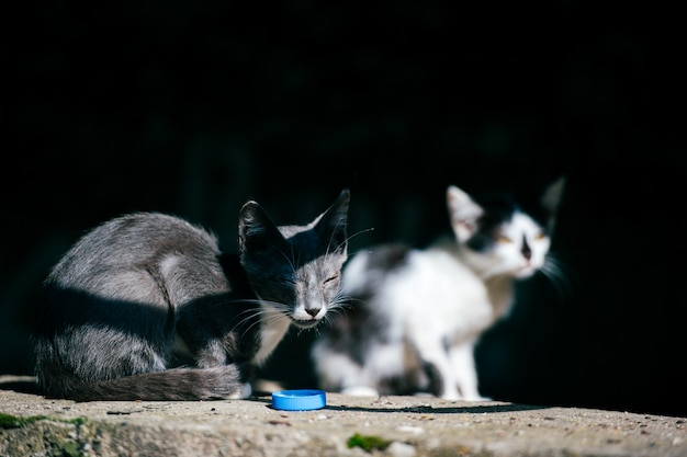 Two poor homeless vagrant sick urban unhappy little cats sitting together in summer day under bridge  looking around. pets outdoor. unhealthy street kittens life. hungry animals