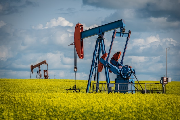 Two pump jacks in a canola field in bloom in saskatchewan, canada