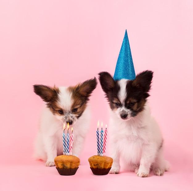 Два щенка празднуют день рождения
