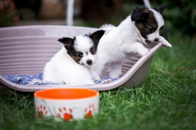 Два щенка в корзине возле миски, на траве