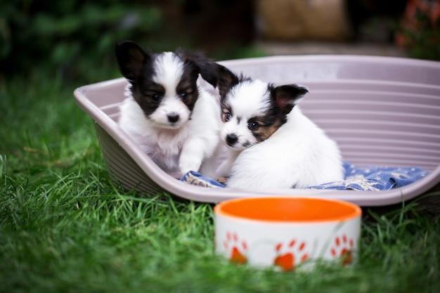 잔디에 그릇 근처 바구니에 두 강아지