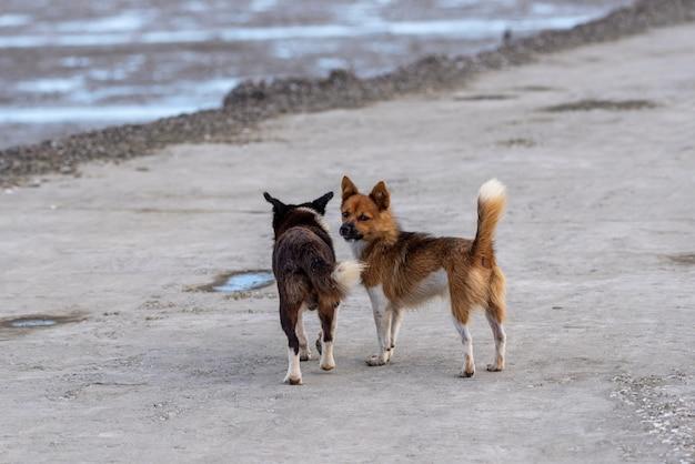 길 위의 강아지 두 마리가 주위를 둘러보고 있다