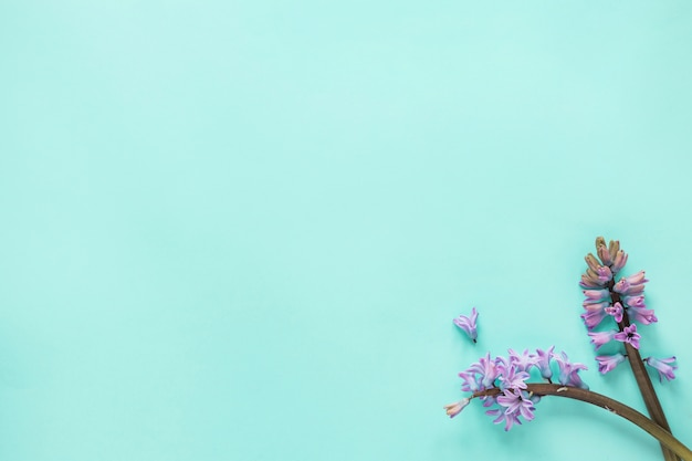 Two purple flower branches on blue table