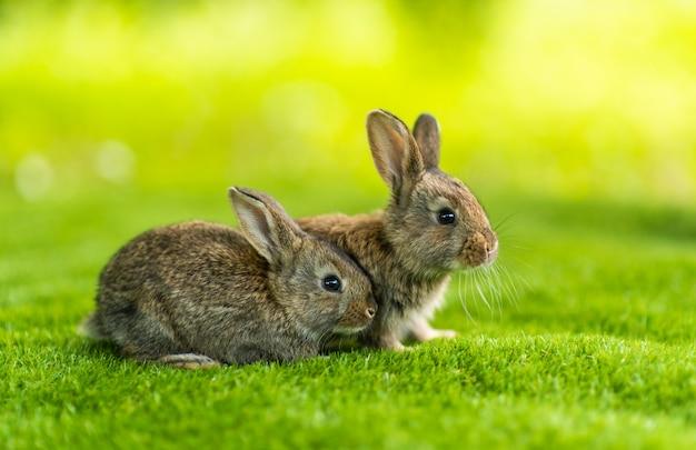 Два кролика на зеленой траве в летний день. два зайца сидят в зеленой траве под лучами солнца.