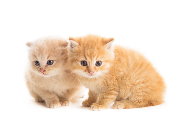 Два рыжих котенка, изолированные на белом фоне