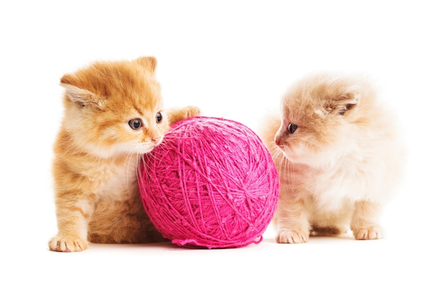 Two red kittens play with purple ball of yarn, isolated on white