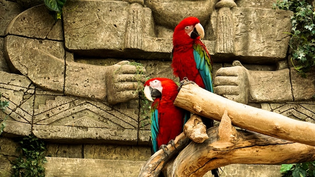 Two red parrots macaw on a branch jungle
