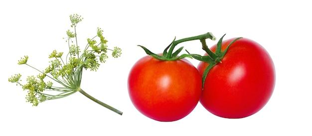 흰색 배경에 두 개의 빨간 토마토와 딜, 분리