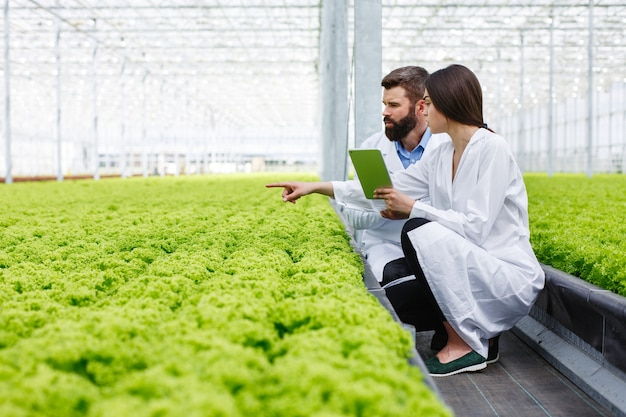 Two researches man and woman examine greenery with a tablet in an all white greenhouse