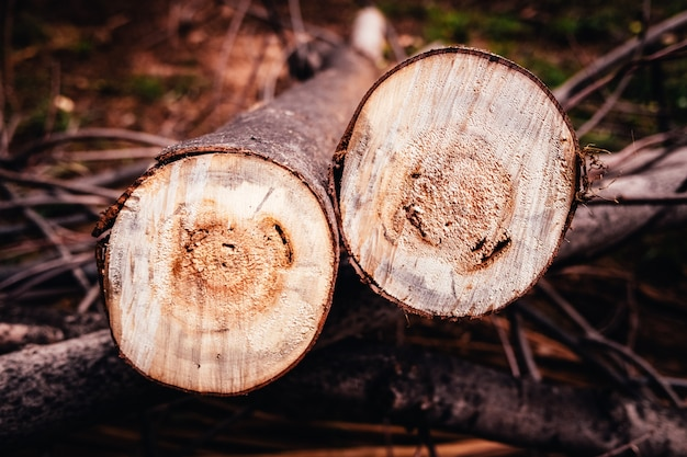 Two sawn logs lying on the ground,  forest deforestation.
