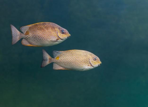 水族館の2つの海の魚