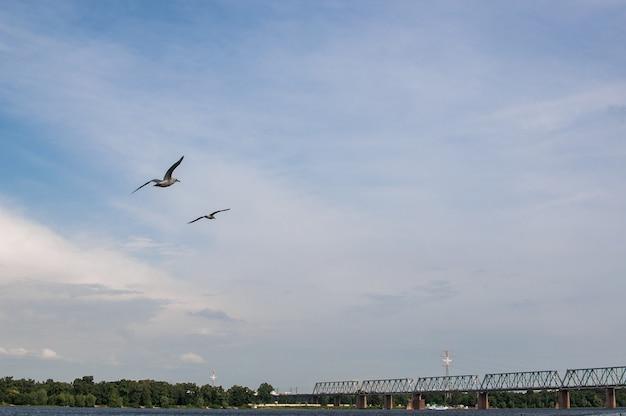 두 마리의 갈매기가 저녁에 푸른 하늘을 날고 있습니다. 바닷새는 저수지 위의 공중에서 우아하게 날아갑니다.