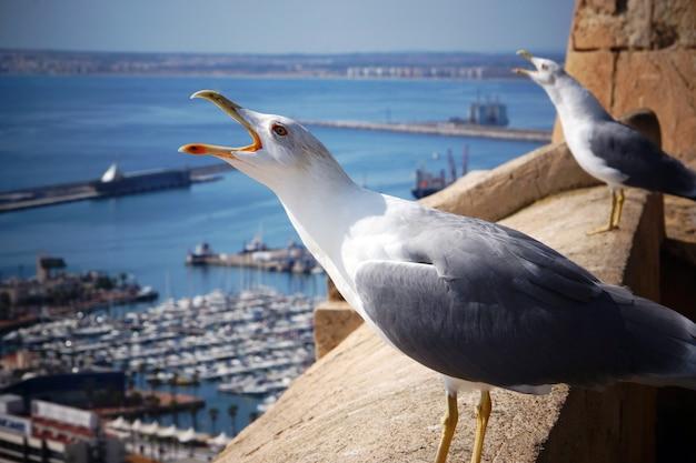 Две чайки кричат, поднимая головы на краю крепости у моря.