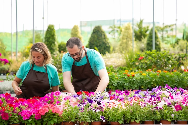 Due giardinieri professionisti seri che si prendono cura di fiori di petunia e in piedi all'aperto