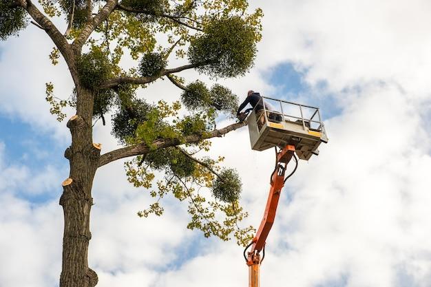 Двое обслуживающего персонала срезают большие ветви деревьев бензопилой с платформы подъемника для высоких стульев. вырубка лесов и концепция садоводства.