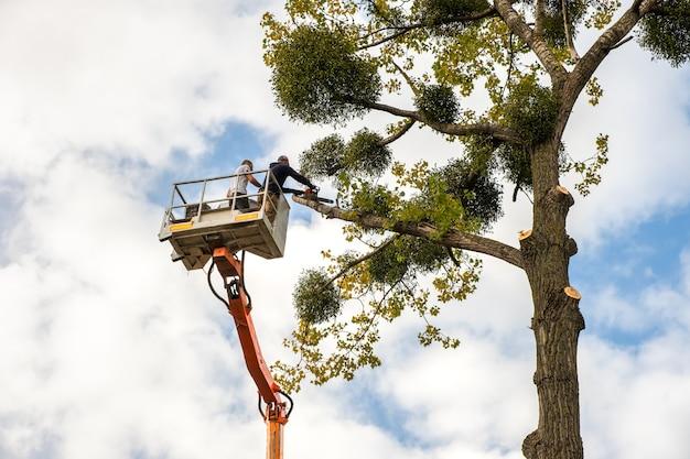 Двое обслуживающего персонала срезают большие ветки деревьев бензопилой с подъемного крана для высоких стульев