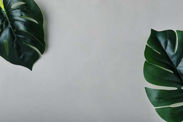Two sheets of monstera on a grey background that are located diagonally in the corners of the frame and copy space for text or messages or announcements about discounts. minimal creative concept.