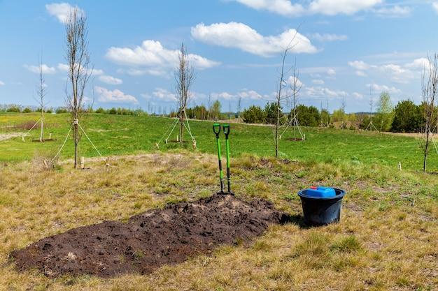 成長する若い木の近くに2つのシャベルとバケツが立っています。若い木の近くのシャベル