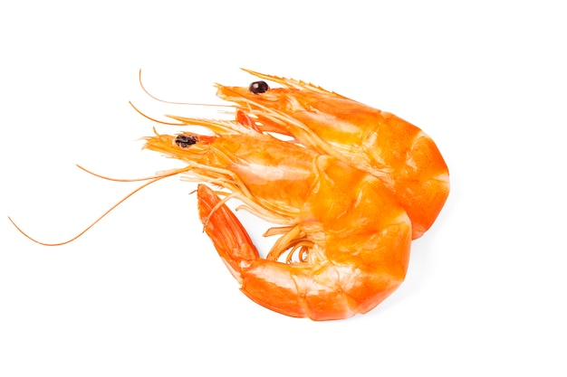 Two shrimps on white background