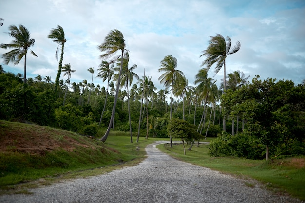 The two sides of the trail are planted with plant palm trees