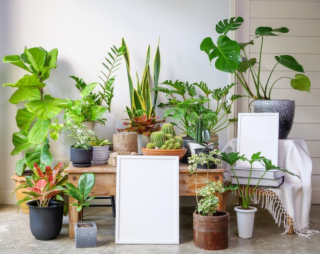 Two size mock up poster wooden frame  and monstera giant botanical tropical house plant in beautiful concrete pot set on wood table in modern living room stylish with loft cement  floor